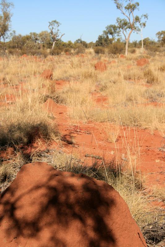 Termite mounds - Junda Road