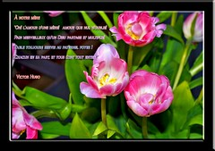 Bonne Fte des Mres Mamman! (unonymous) Tags: flowers nature french mom poem mother mothersday mamman francais victorhugo