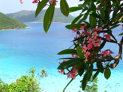 Plumerias in Paradise (avsfan1321) Tags: ocean pink flowers blue sea flower green water islands bay plumeria stjohn virginislands usvirginislands usvi annaberg virginislandsnationalpark annabergsugarmill annabergsugarmillruins