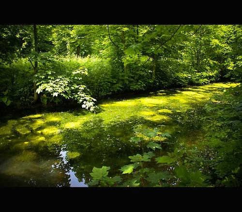 Vincennes Woods