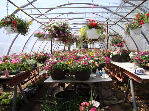 uncle john's greenhouse
