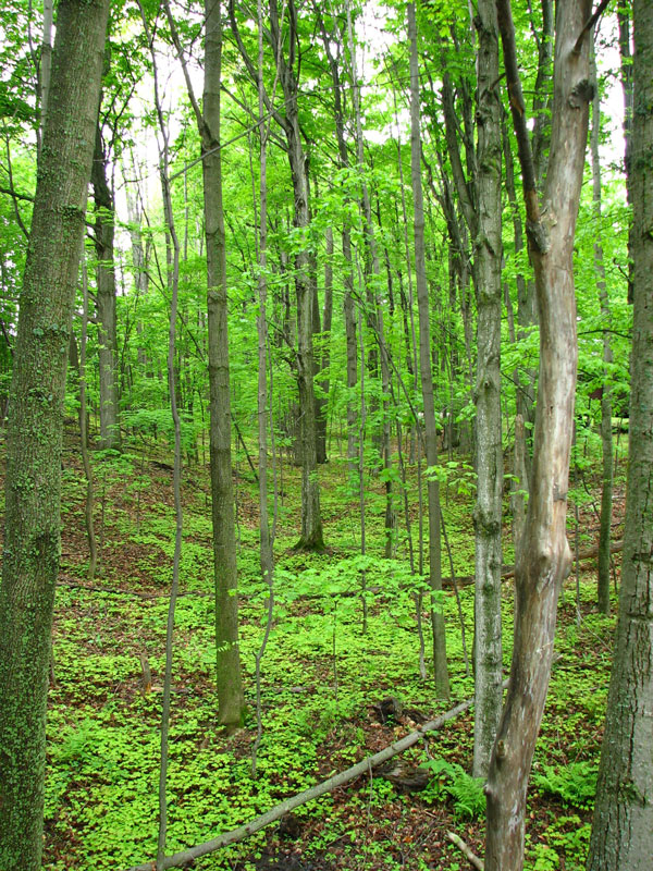 Woods at Camp Michigania