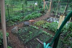 garden in the rain 1