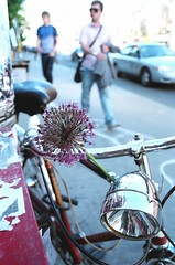 Globe-al Biker