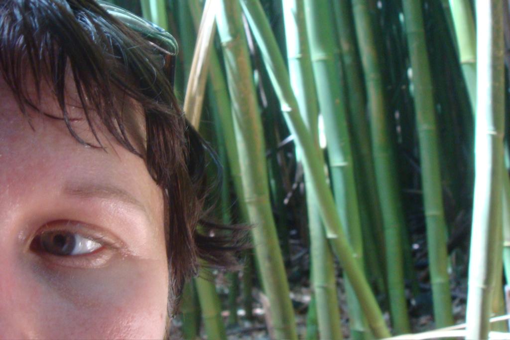 bambooterror