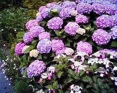 purple + ゜'・:*:.。.:*:・'゜☆