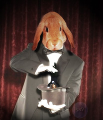 Watch me pull a magician out of my hat! (Gravityx9) Tags: rabbit photoshop altered fluffy chop fabulous multicolored magical 0506 specialeffects blogthis musictomyeyes smorgasbord ithink photosmiles americaamerica creativephoto 052906 abigfave psfo onlyphotoshop geniiloci extraordinarycompositions trabajarconphotoshop photoshopmasterpiece goldstaraward yourpreferredpicture clevercreativecaptures elreydemicasa photosphotoshoped totalphotoshop photosthatmakeyoulaugh extremest awardtree photographersgonewild sensationalcreations thekingofmyhome goldenaardvarkaward