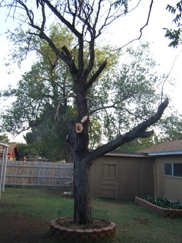 Tree After Trimming