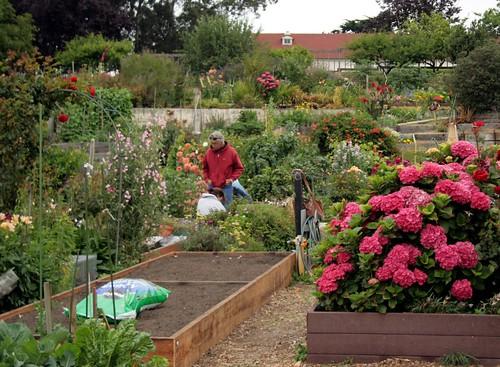 Saturday gardening