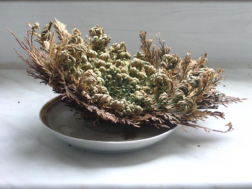rose of jericho tattoo. Rose of Jericho: Day 2
