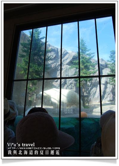 【夏の北海道 】日本旅遊景點大人氣~旭川 - 旭山動物園旭山動物園