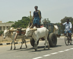 Oxen carts on the Mysore Road going to Srirangapatanam (Mike Fairbanks) Tags: india tipusultan srirangapatanam tippusultan gumbaz india2008