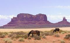 20080801-_MG_2626-Edit (buddy4344) Tags: arizona landscape navajo monumentvalley navajotriballand