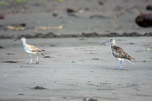 Costa Rica - Día 4 (298)