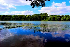 Reflections (Nature) (natureloving) Tags: blue sky france reflection tree nature water river nikon chantilly aplusphoto d40x natureloving