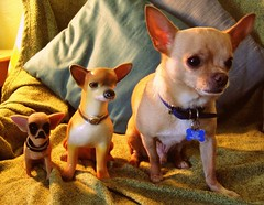 evolution of the chihuahua (EllenJo) Tags: dog pet chihuahua silly home digital evolution olympus chihuahuas bobblehead floyd 2008 honeyboy digitalimage chalkware fakeandreal ellenjo editedwithpicnik ellenjoroberts ellenjdroberts evolutionofthechihuahua 3chihuahuas kitschandcrapola bornin2003