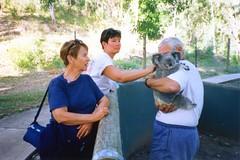 920621 Whitsunday Koala (rona.h) Tags: caroline australia 1992 cacique ronah vancouver27 bowman57