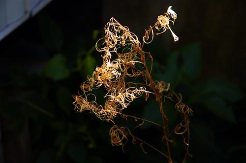 tangle of something