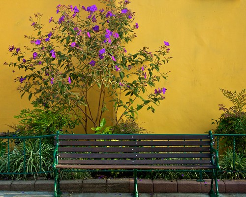 Tree, Bench, and Yellow Wall