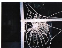 Spider web on our  rose arch (Martha-Ann48) Tags: garden silk silhouettes nightview gossamer spiderwebs delicates