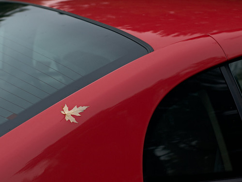 Leaf on Mustang