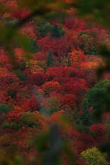 Eye candy (Allen's Photography) Tags: autumn fall colors beautiful lakesuperior anawesomeshot unlimitedphotos kunstplatzlinternational goldenheartaward allensphotography