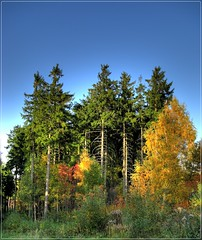 waldreich / well wooded (.:AR:.) Tags: germany landscape deutschland saxony sachsen landschaft hdr erzgebirge abigfave chdk a720is kemtau