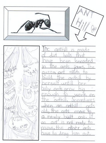 ant hill notebooking