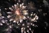 Fireworks (Guus Krol) Tags: fireworks ukraine kazantip казантип украина z16 烟花爆竹 mirnyy kazantip2008 krymavtonomnarespublika