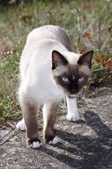 Comtesse (frederic_45240) Tags: catnipaddicts