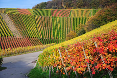 Vineyard (Habub3) Tags: travel autumn holiday nature colors germany landscape deutschland photo vineyard flora nikon europa europe urlaub herbst natur autumncolors landschaft vacanze reise wein farben weinberg d300 herbstfarben remstal abigfave viewonblack platinumphoto colorphotoaward aplusphoto natureselegantshots habub3