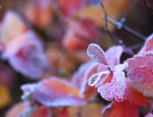 First frost 1