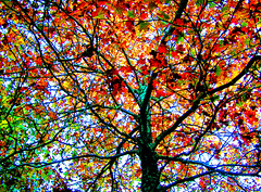 Pine Forest Colorful Tree (Rusty Russ) Tags: world birthday new flowers autumn trees wedding light red party arizona sky favorite usa white france flower color tree green art fall cars nature graveyard car rose america photoshop manipulated ma island flying photo dance interesting twilight colorful flickr hole image space wildlife plum picasa best most balck views montage buy getty cs fav universe northernlights 08 newburyport refuge facebook manipulate stumbleupon flyingcars roseflower freeimage psdtuts stumbelupon