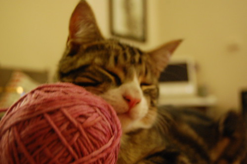 The perils of knitting with Puzz