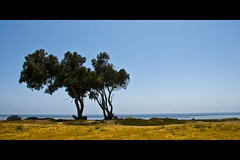 Horizontals: Seascape with trees (manganite) Tags: ocean california blue trees summer sky usa seascape green nature topf25 colors grass yellow santabarbara digital america landscape geotagged coast nikon colorful seasons tl framed meadow dry sunny bluesky onecolor d200 nikkor dslr thecolorblue islavista goleta 18200mmf3556 utatafeature manganite nikonstunninggallery pcific repost1 date:year=2008 date:month=july date:day=25 geo:lat=34409601 geo:lon=119863125 windowtotheseapark format:orientation=landscape format:ratio=21 repost2