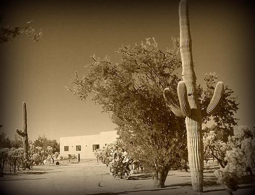 cactus bw