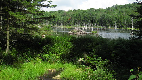Beaver Dam and Lodge