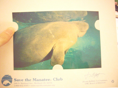 This is a photo of my manatee, Ariel.