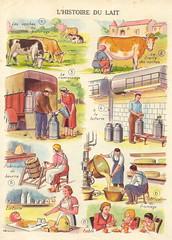 L'histoire du lait