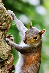 Scoiattoli al Parco di Nervi 03 (Studio Grafico EPICS) Tags: squirrel squirrels genoa genova scoiattolo geno