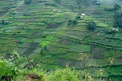 Uganda Terraces 3/4