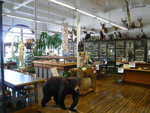Rhode Island School Of Design Nature Lab
