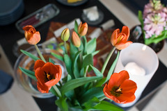 Our Persian New Year Table (funkaoshi) Tags: digitalrebelxt persiannewyear canon28mmf18usm narooz