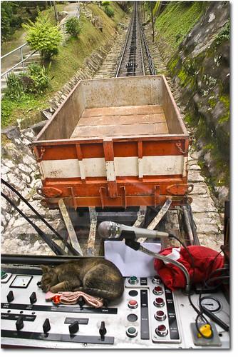 Cat Sleeping- Funicular Penang