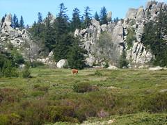 Tiens ! Une vache sur la plaine d'Uovacce...