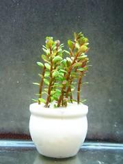 Thủy Sinh Tuấn Anh-Chuyên cây & Rêu Thủy Sinh, Cá Cảnh Biền & Hồ Cá Cảnh Biển - 7