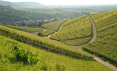 Vineyards (Axxolotl) Tags: green nature germany deutschland spring natur vineyards grn frhling badenwrttemberg badenwuerttemberg weinberge wengert remstal weinstadt strmpfelbach remsmurrkreis