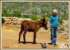 PN Garraf 108 - ruc catal - Pocholo i Franoise (ferran pestaa) Tags: garraf ruccatal galope parcnatural olivella plananovella burrocataln equusasnus