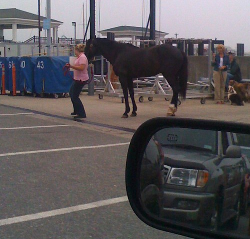 Horse Waiting For Ferry