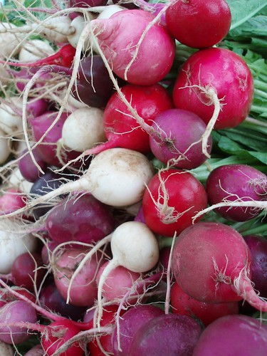 Red pink and white radishes at Elmwood-Bidwell Farmers Market Buffalo NY